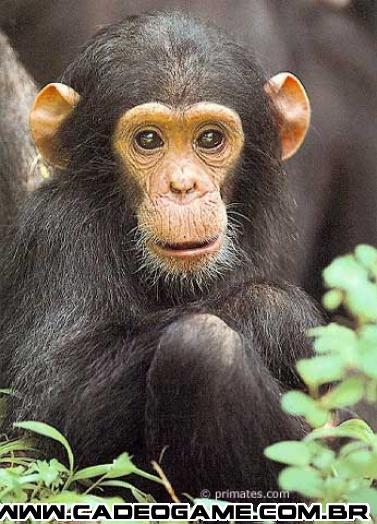 http://2.bp.blogspot.com/_L6E4hOYhics/RqoUBJulhCI/AAAAAAAAHqQ/bY-3AWFLRDU/s1600/chimpanze_05.jpg